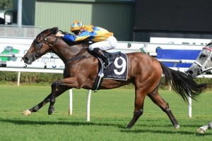 Group 1 Canterbury Stakes winner Cosmic Endeavour headlines the 2015 Queen Of The Turf Stakes first acceptances.
