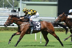 Griante will return to racing in Saturday's Listed Regal Roller Stakes at Caulfield. Photo: Steve Hart