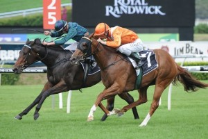 Twirl (inside) will not contest the 2014 Flight Stakes