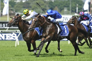 Astern, blue colours, and El Divino, white and green, dead heat in the Kindergarten Stakes at Randwick. Photo by Steve Hart.