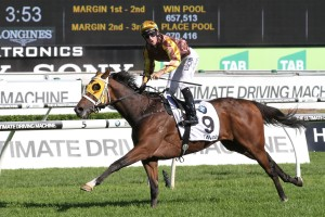 Tavago is yet to be confirmed as a 2016 Hill Stakes starter. Photo: Ultimate Racing Photos