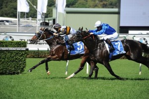 Hi World (inside) led from start to finish to take out the Carbine Club Stakes. Photo: Steve Hart