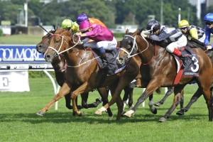 Japonisme (centre, pink cap) and Counterattack (outside)