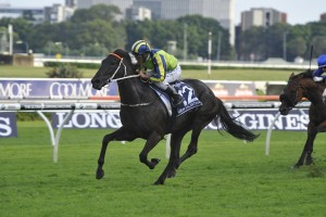 Queen Elizabeth Stakes odds were $7 on the 2016 winner Lucia Valentina