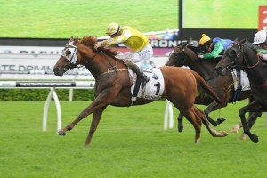 Criterion is a leading chance for success in the 2014 Hill Stakes