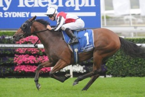 Gypsy Diamond takes out the Carbine Club Stakes 2014