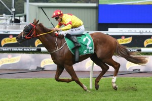 Mercurial Lad made it three wins on the trot with a strong win in the Highway Handicap. Photo by: Steve Hart
