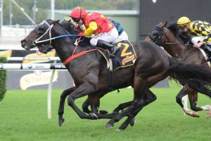 Dissident scored his fifth Group 1 victory in winning the All Aged Stakes at Randwick. Photo by Steve Hart.