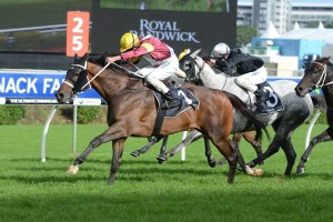 2013 Sydney Cup Day Preview – Royal Randwick