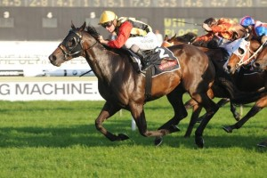 Magic Millions Sprint betting favoured the 2011 winner Temple Of Boom