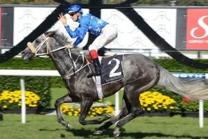 No 2013 Melbourne Spring Racing Carnival for Reliable Man