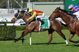 Delectation is reportedly primed for a big performance in Saturday's Group 1 Doomben 10,000. Photo: Steve Hart