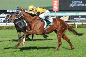 Noela's Choice will contest Saturday's 2015 Winter Stakes at Rosehill Gardens. Photo: Steve Hart