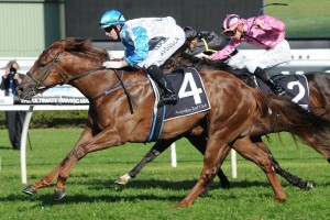 Sebring Sun charged home to win the 2015 Rosebud at Royal Randwick. Photo: Steve Hart