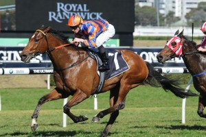 Trainer Anthony Cummings has revealed the 2014 Epsom Handicap as the major Target for As Needed this time in
