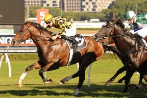 Scissor Kick is a leading chance for success in the 2014 Stan Fox Stakes