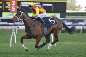 Omei Sword remains a clear favourite in early Flight Stakes betting markets. Photo: Steve Hart