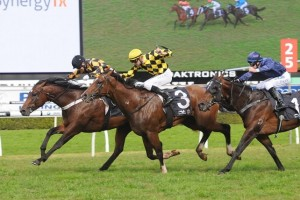 Scissor Kick scored a most narrow of wins over Panzer Division in the 2014 Up And Coming Stakes.
