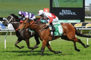 Astronomos will contest the 2015 Newcastle Gold Cup. Photo: Steve Hart