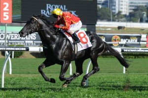 Aussies Love Sport has been included in nominations for the 2014 Concorde Stakes