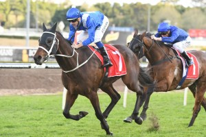 Horses to watch during the Sydney Autumn Carnival: Winx @ Ladbrokes.com.au