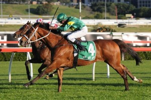 Moriarty is likely to be Chris Waller's leading hope for the 2014 Carlyon Cup