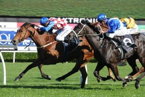 Streama is returning to the races in the Breeders Classic this weekend for the first time since she finished a narrow second behind Boban in the Epsom Handicap during the 2013 Spring Racing Carnival.