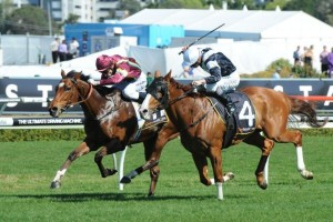 2014 Mackinnon Stakes Target for Jacquinot Bay