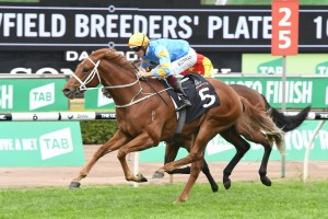 Ladbrokes Sydney Autumn Racehorses to Tip: Performer