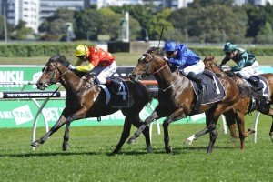 2016 Roman Consul Stakes Results: Russian Revolution Beats Astern