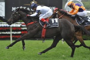 2016 Spring Champion Stakes Winner Yankee Rose onto Cox Plate