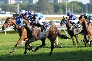 Sharnee Rose was withdrawn from the 2014 Queen Of The Turf Stakes after breaking down in trackwork during the week.