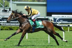 2015 Skyline Stakes Betting Update