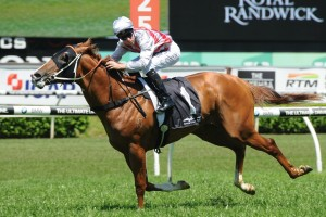 Star Turn ill return to racing in the Group 3 San Domenico Stakes at Rosehill Gardens on Saturday. Photo: Steve Hart