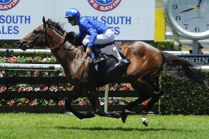 Astern is our pick to take out the 2016 Silver Slipper at Rosehill on Saturday. Photo: Steve Hart