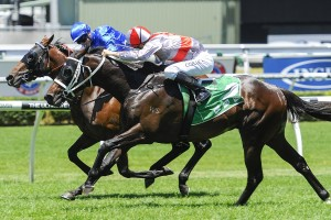 Torgersen will line up for Saturday's Group 3 Frank Packer Plate at Randwick. Photo: Steve Hart