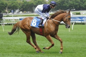 Extreme Choice will return to racing in the Chairman's Stakes at Caulfield on February 6th. Photo: Steve Hart