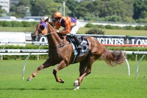 Craftiness could take on Our Boy Malachi (pictured) in the Stradbroke Handicap during the winter.