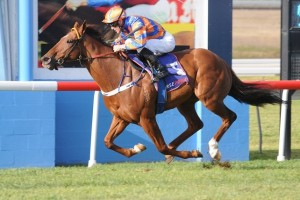 Trainer Anthony Cummings has revealed Fontelina is likely to line up for the 2014 George Ryder Stakes