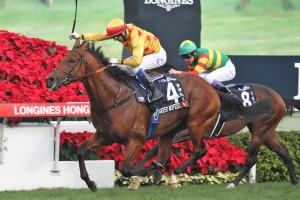 Akeed Mofeed stormed home late to enhance his value as a stud prospect in the Hong Kong Cup at Sha Tin on Sunday.
