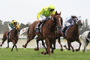 2015 Adelaide Cup Next for Taiyoo