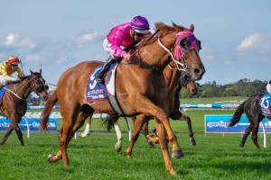Melbourne Cup the Spring Target for Like A Carousel