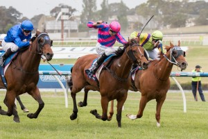 Fast 'N' Rocking won the 2014 Kevin Heffernan Stakes at Sandown this afternoon. Photo: Sarah Ebbett