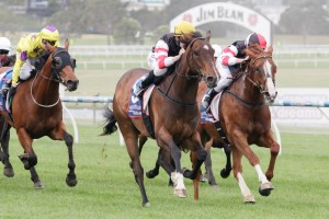 Audino (outside, in front) and Scelto (inside) will both back up at Flemington on Saturday.