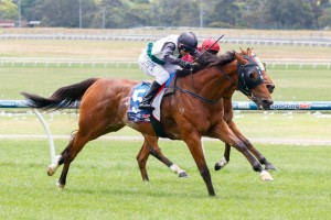Backstedt will have to overcome a wide start in the Kilmore Cup on Saturday.