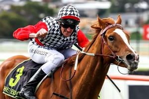 Akzar has been included in nominations for the 2014 Eagle Farm Cup