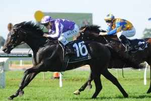Danesiri was the upset winner of the Guy Walter Stakes at Warwick Farm.