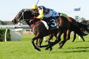 Thump has been confirmed to contest this afternoon's Ramornie Handicap in Grafton. Photo: Steve Hart