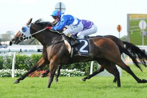 Betting Update &#8211; 2013 Queensland Oaks