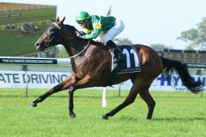 Snitzerland has been included in nominations for the 2014 All Aged Stakes